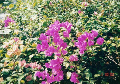 199312HKGSGNPEN036.jpg
