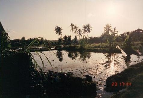 199412BWNBali011.jpg